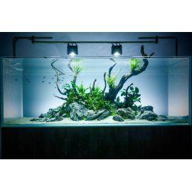 Создание успешного аквариума