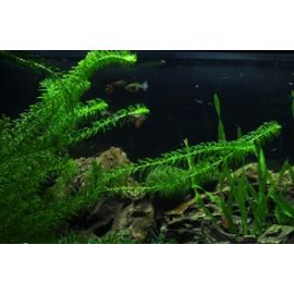Быстрорастущие растения – помощники в борьбе с водорослями
