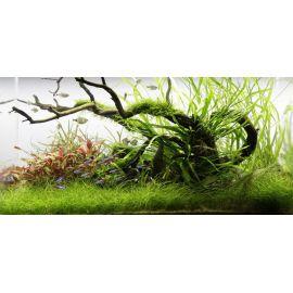 Взросление аквариума – разрастание растений