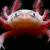 Черепахи, Лягушки, Тритоны, Аксолотли (2)