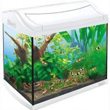 Аквариум для креветок AquaArt Shrimps Discover Line белый 20л 38х26х34см