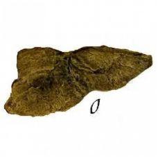 Камень - Модуль O