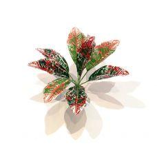 Куст широколистный Аглаонема Simple Zoo - Красные листья, 18 см