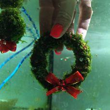 Мох рождественский (Южная Америка)(рождественское кольцо)(аквадекор)