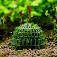 Мох Яванский на пластиковом шаре (аквадекор)
