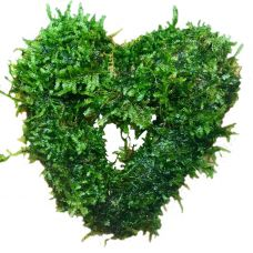 Сердце из Яванского Мха (аквадекор)