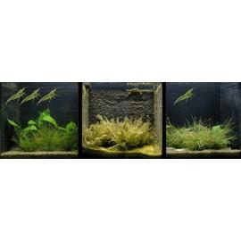 Контроль роста нежелательных водорослей