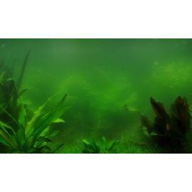 Виды водорослей