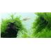 Мох Яванский Южно-Американский на лаве (аквадекор)