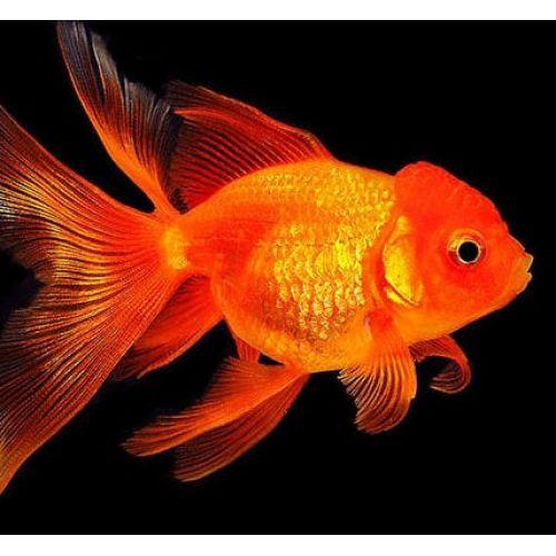 Три рыбки - Три рыбки - Олег Сунцов   500x500