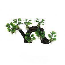 Декоративная композиция ArtUniq Branched Driftwood With Anubias nana M2