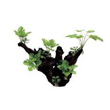 Декоративная композиция ArtUniq Mangrove Driftwood With Philodendron XL