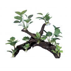 Декоративная композиция ArtUniq Mangrove Driftwood With Anubias XXL2