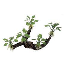 Декоративная композиция ArtUniq Branched Driftwood With Anubias nana M6