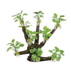 Декоративная композиция ArtUniq Branched Driftwood With Anubias nana M8