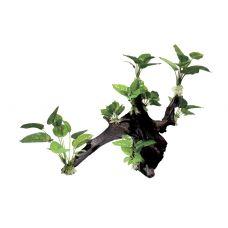Декоративная композиция ArtUniq Mangrove Driftwood With Anubias XL1
