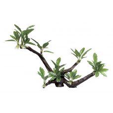 Декоративная композиция ArtUniq Branched Driftwood With Anubias lanceolata XL