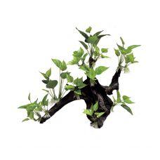 Декоративная композиция ArtUniq Mangrove Driftwood With Anubias L3