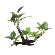 Декоративная композиция ArtUniq Branched Driftwood With Anubias lanceolata M2