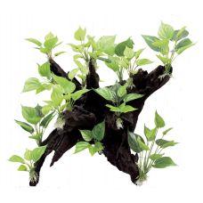 Декоративная композиция ArtUniq Mangrove Driftwood With Anubias L1