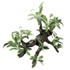 Декоративная композиция ArtUniq Branched Driftwood With Anubias lanceolata XXL