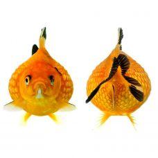 Жемчужинка (4 - 5 см)